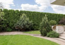 Image of garden with hedge border with question of who owns hedge