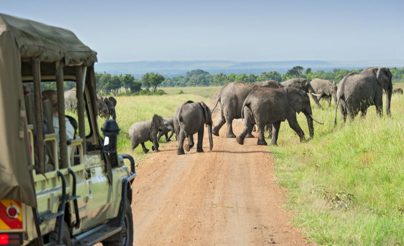 Bucket List African Safari