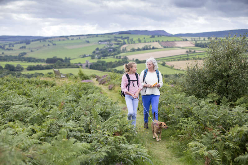 Happy mature woman holding hands with her family while moving up the hill towards their picnic place as part of trying to live well for longer.