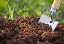 peat-free compost gardens will be big in 2020