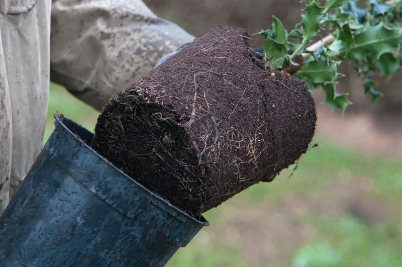 Plant a hedge