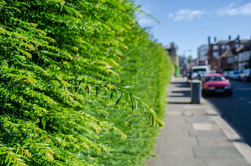 Plant a hedge Hedges can reduce noise and pollution