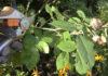 autumn-garden-checklist
