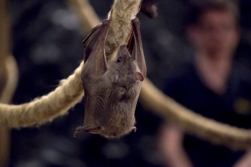 bats-in-winter-hibernate-in-trees