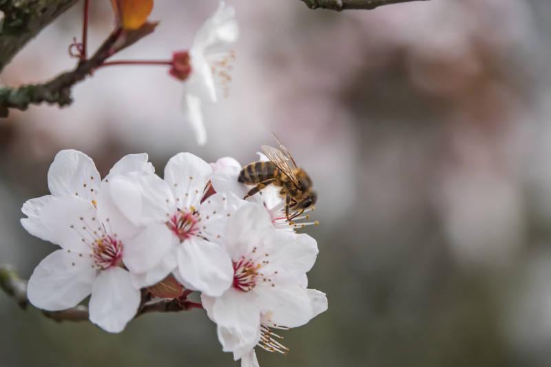 winter-flowers-help-bees-hibernate