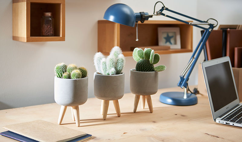 Cacti are the easiest houseplants and an ideal Christmas gift (Suttons/PA)