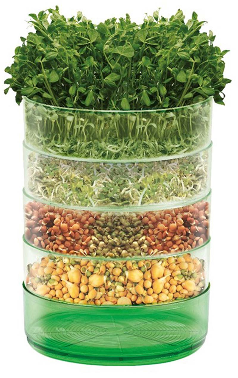 Microgreens can be grown on a windowsill and are perfect Christmas gifts (Johnsons Seeds/PA)