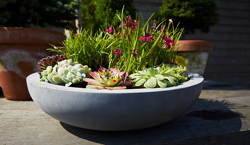 Stylish pot-planting make an ideal Christmas gift for gardeners (The Pot Company/PA)