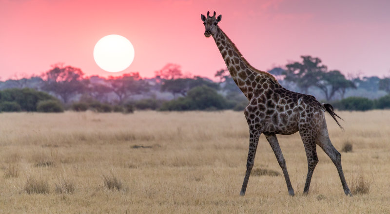 How to save for bucket list ideas and go on safari in Africa