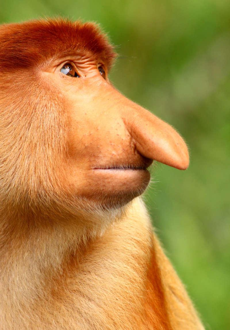 Exotic island destinations A proboscis monkey (K Y Tan/BBC/PA)