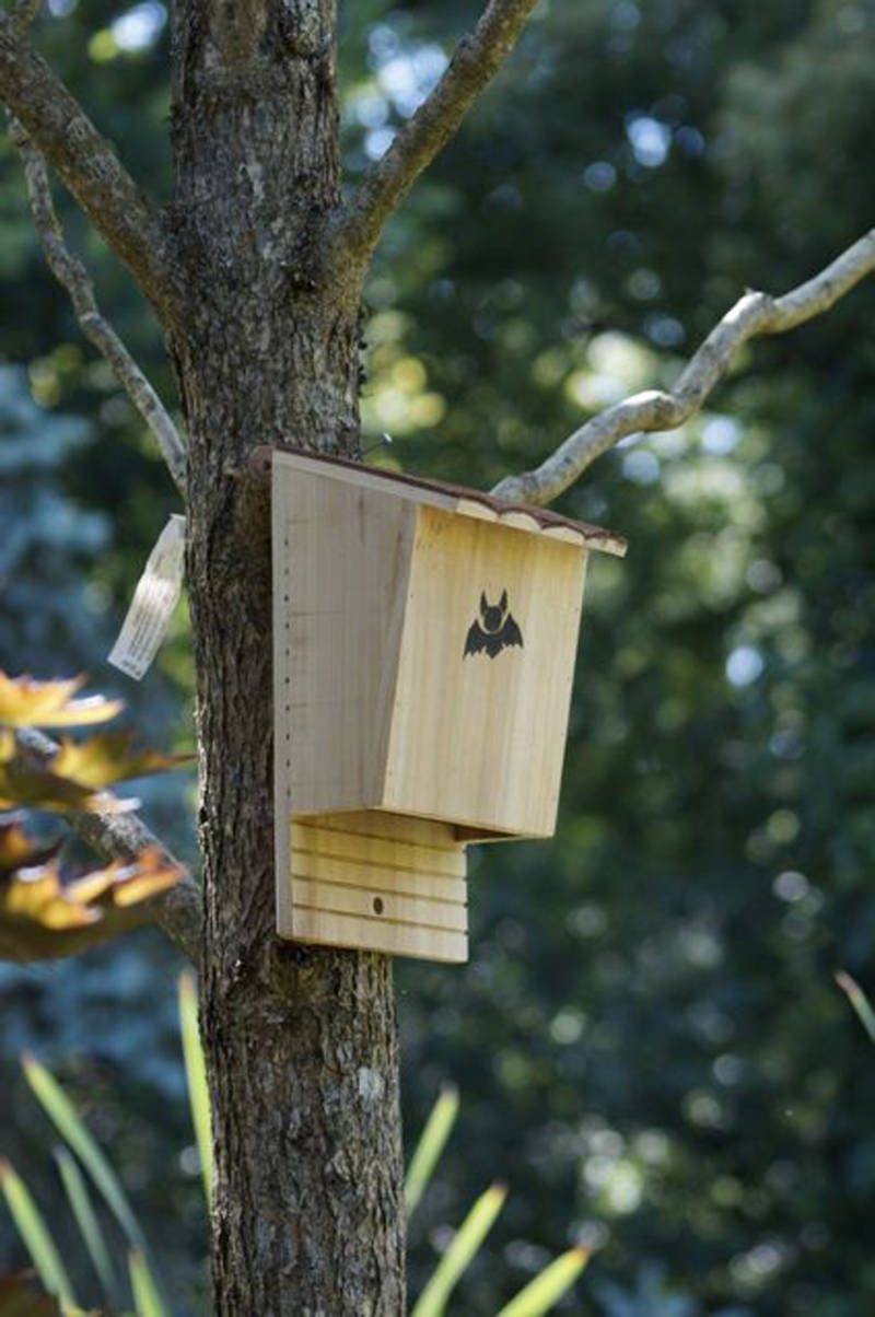 Bat boxes are ideal on tree trunks (Amazon/PA)