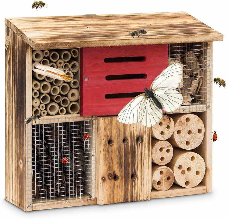 Give insects a good home (Amazon/PA)