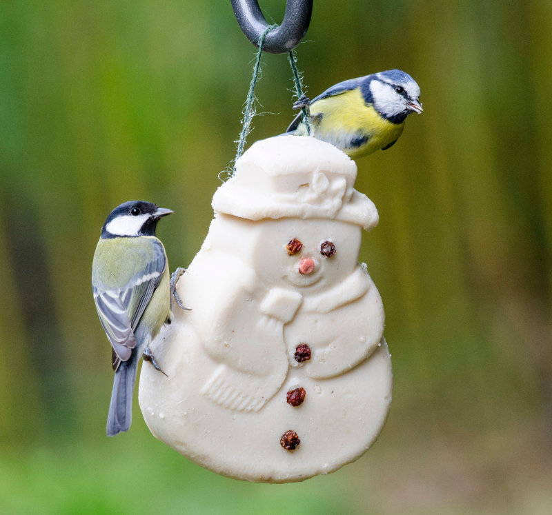 Hang a suet snowman on a tree outside to help with feeding wildlife in winter (CJ Wildlife/PA)