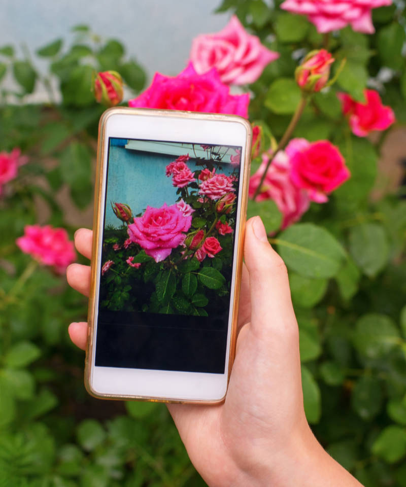 Gadgets and apps will be one of the big garden trends 2020 (iStock/PA).