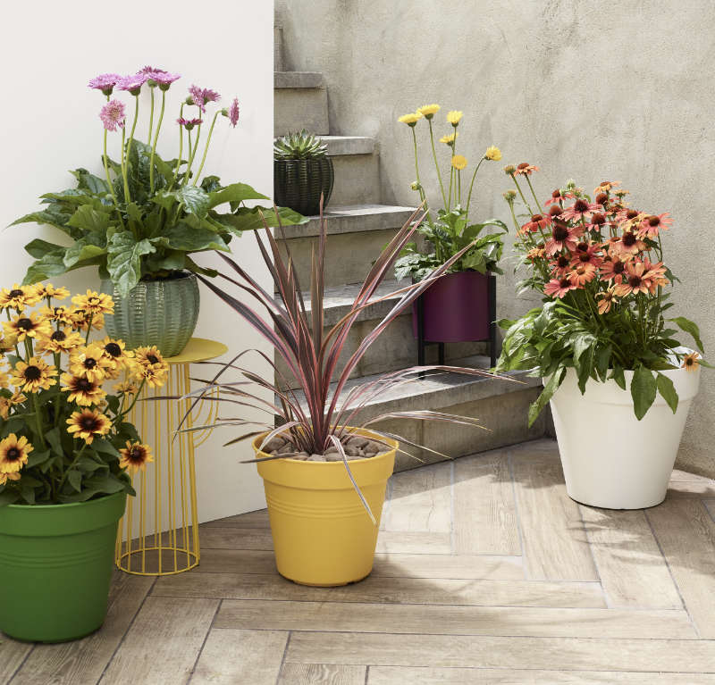 Colourful pots will add to the look (Dobbies Garden Centres/PA)