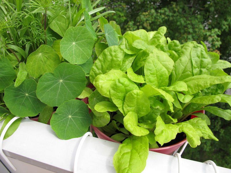 Gardening helps make friends Sharing veg can prompt conversations and shared knowledge