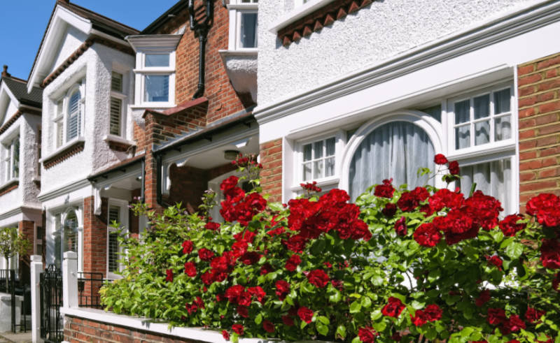 Front garden roses Row of Typical English Terraced Houses in London.