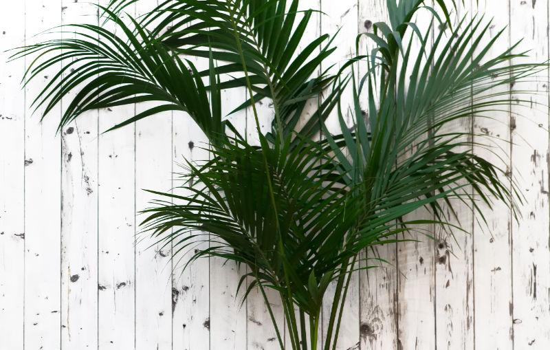 Houseplants that like shade Open balcony with a kentia