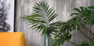 Houseplants that like shade