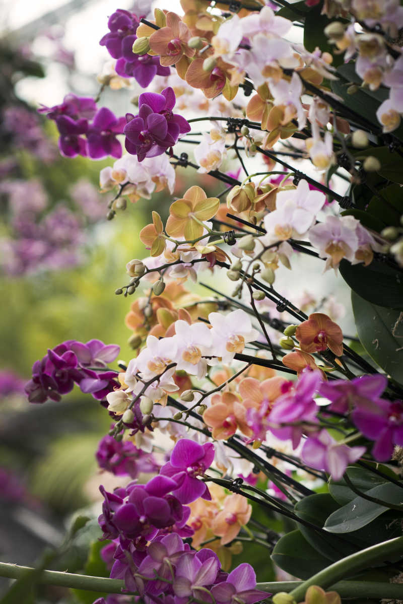 Orchid mania at Kew Gardens Orchid Festival (Jeff Eden/KBG/PA)