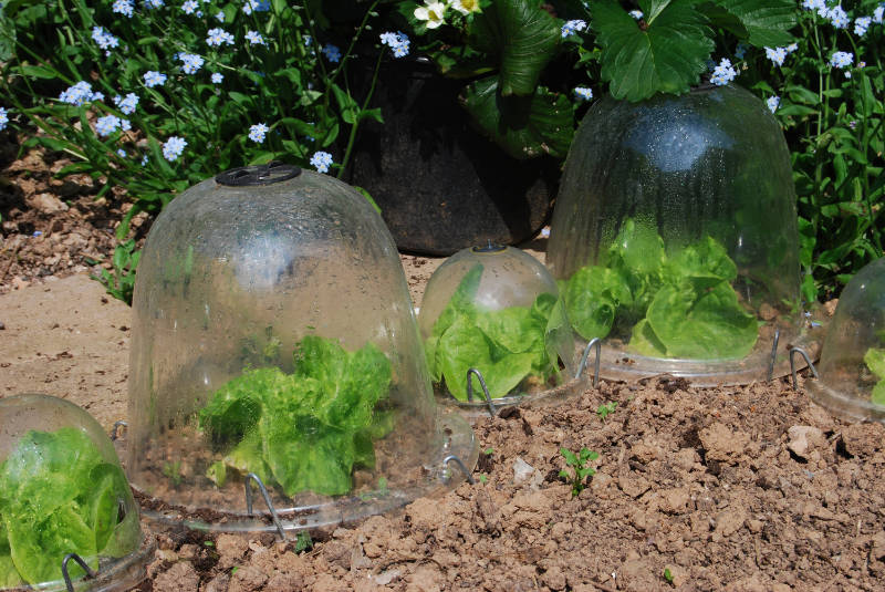 Use cloches for protection when urban gardening (iStock/PA)