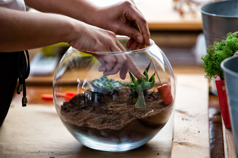 Woman designing her terrarium with succulents and cactus by hand