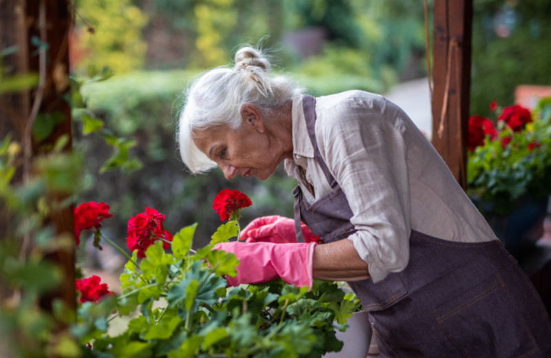 Senior woman taking care of her flowers