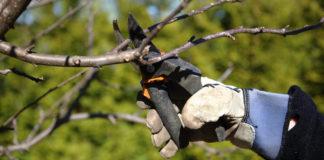 Late winter pruning (iStock/PA)