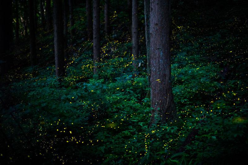 Masahiro Hiroike, Japan, Finalist, Professional, Natural World & Wildlife, 2020 Sony World Photography Awards/PA
