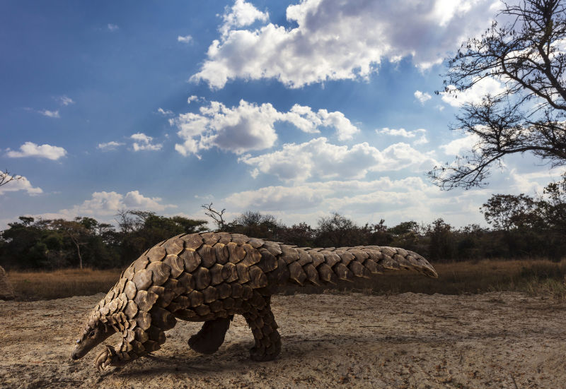 Brent Stirton, South Africa, Finalist, Professional, Natural World & Wildlife, 2020 Sony World Photography Awards/PA