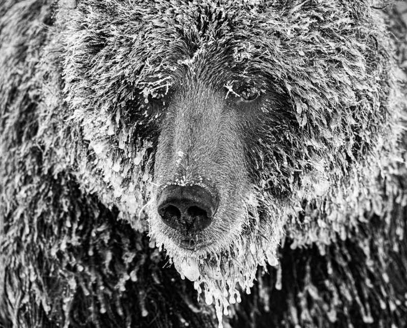 Marko Dimitrijevic, Switzerland, Shortlist, Professional, Natural World & Wildlife, 2020 Sony World Photography Awards/PA