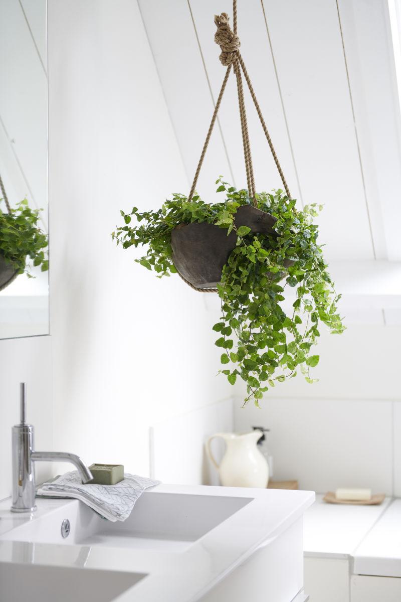 Trailing houseplants