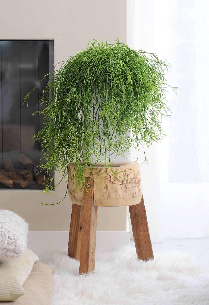 Houseplants Rhipsalis (Thejoyofplants.co.uk/PA)