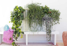 Trailing houseplants