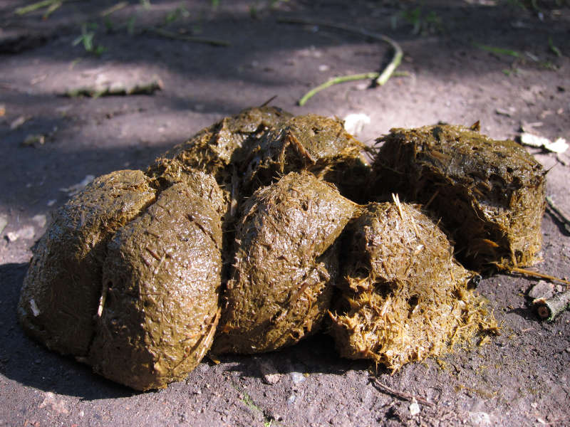 Horse manure needs to be given time to rot down before use (Thinkstock/PA)