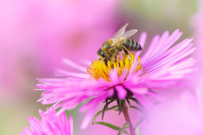 Bees will find flowers to pollinate (iStock/PA)