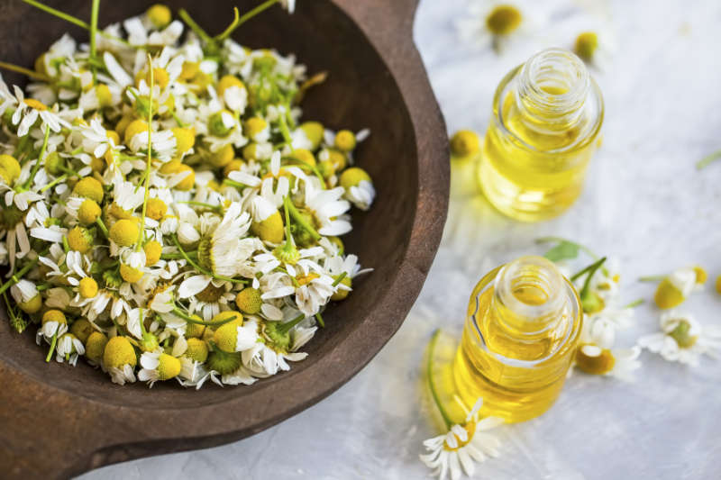 Roman chamomile can be added to massage oil for help stop insomnia.