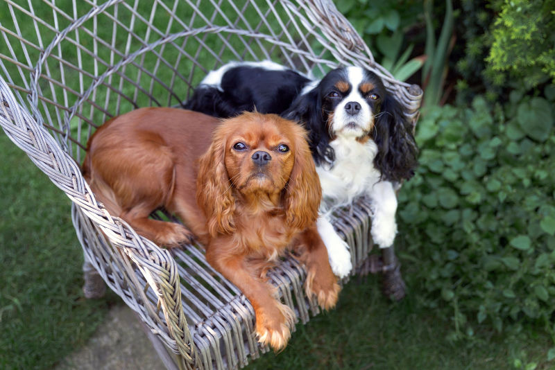 Dog-friendly garden dogs sitting on garden chair