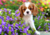 How to make your garden safe for dogs