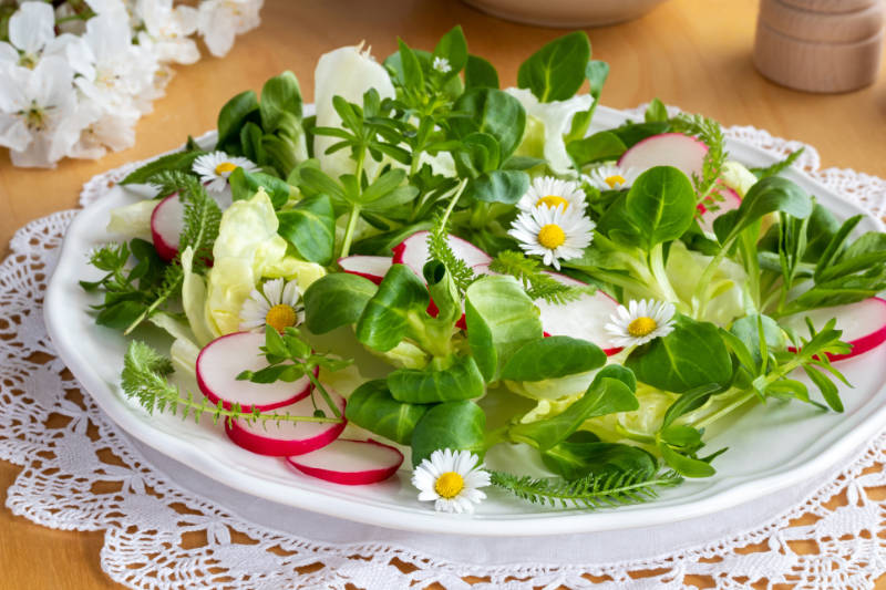 Edible weeds Spring salad with bedstraw, chickweed, yarrow and other wild edible plants