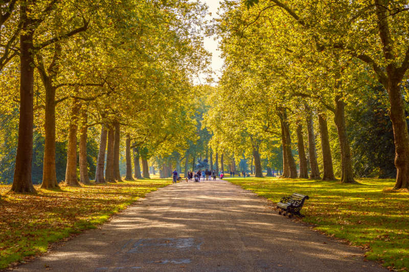 Forest bathing online – Tourists walking on a tree lined path in Hyde Park, autumn season