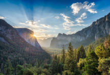 Forest bathing online Yosemite National Park