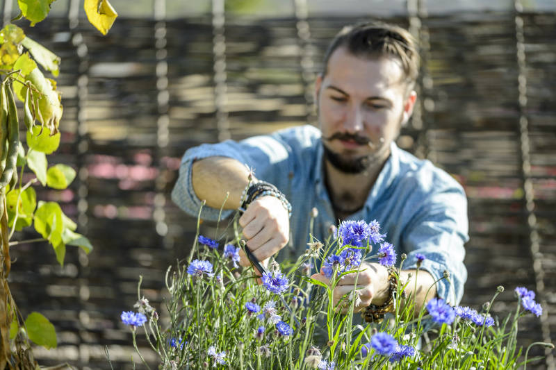 How to grow flowers for cutting hard annuals