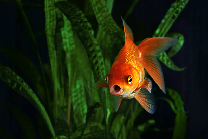 How to stock a pond means remembering that fish can be fussy.