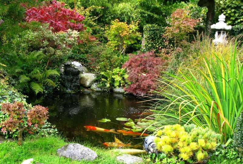 Have a good variety of marginal plants (Thinkstock/PA)