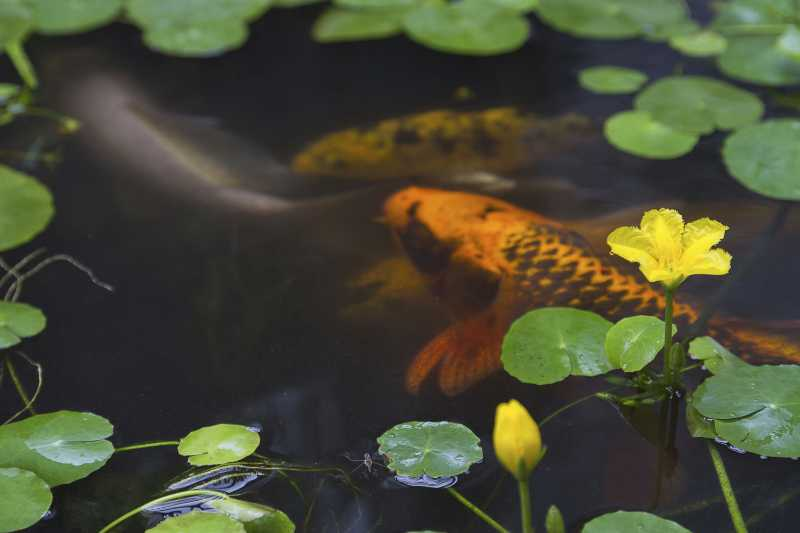 Don't overfill a pond when planning how to stock a pond with fish.