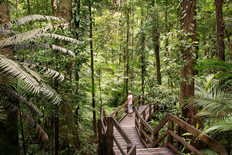 Most beautiful forest in the world Daintree Forest