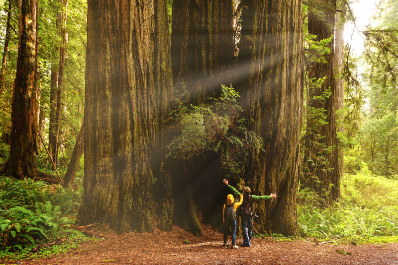Most beautiful forests in the world Hikers admiring Redwood trees, Redwood National Park, California