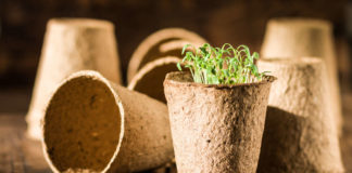 Ditch plastic pots for biodegradable ones (iStock/PA)