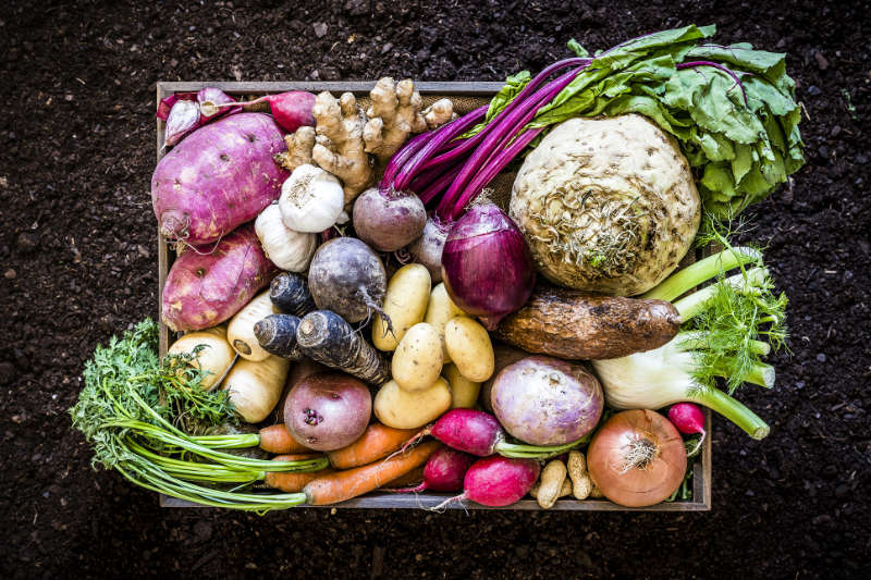 Top view of a large group of multicolored fresh organic roots, legumes and tubers shot on a rustic wooden crate surrounded by soil. The composition includes potatoes, Spanish onions, ginger, purple carrots, yucca, beetroot, garlic, peanuts, red potatoes, sweet potatoes, golden onions, turnips, parsnips, celeriac, fennels and radish